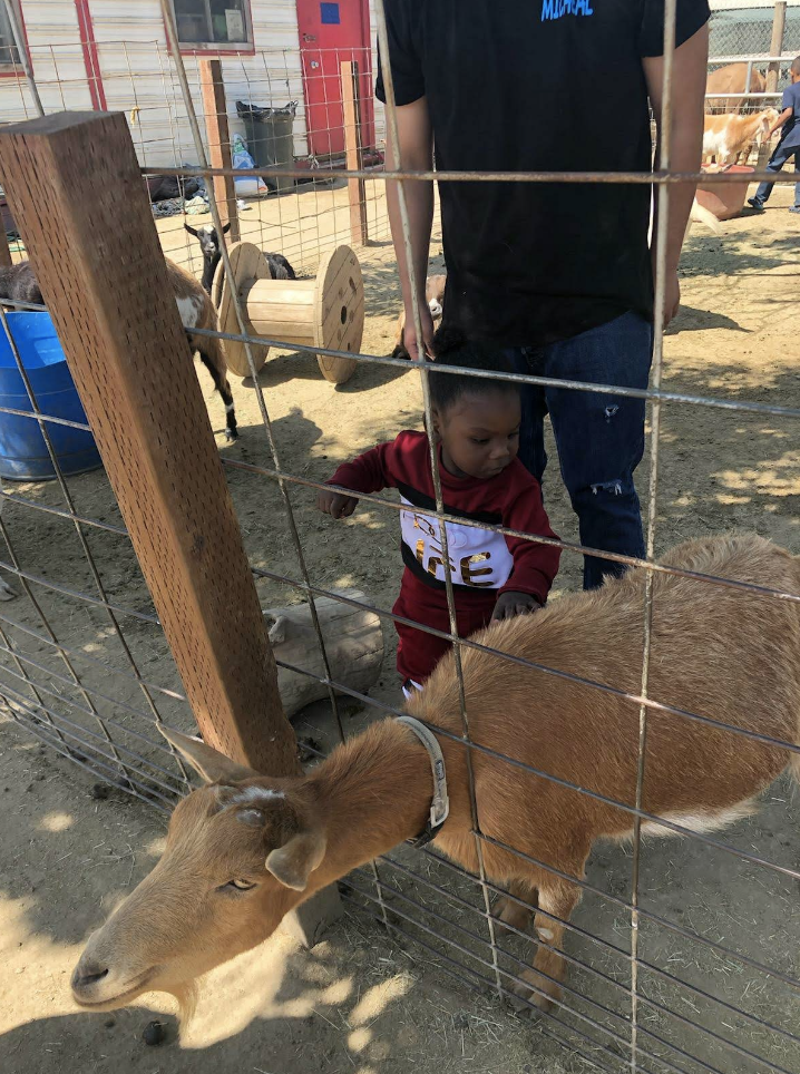A baby boy is petting a goat while his teacher stands behind him watching.